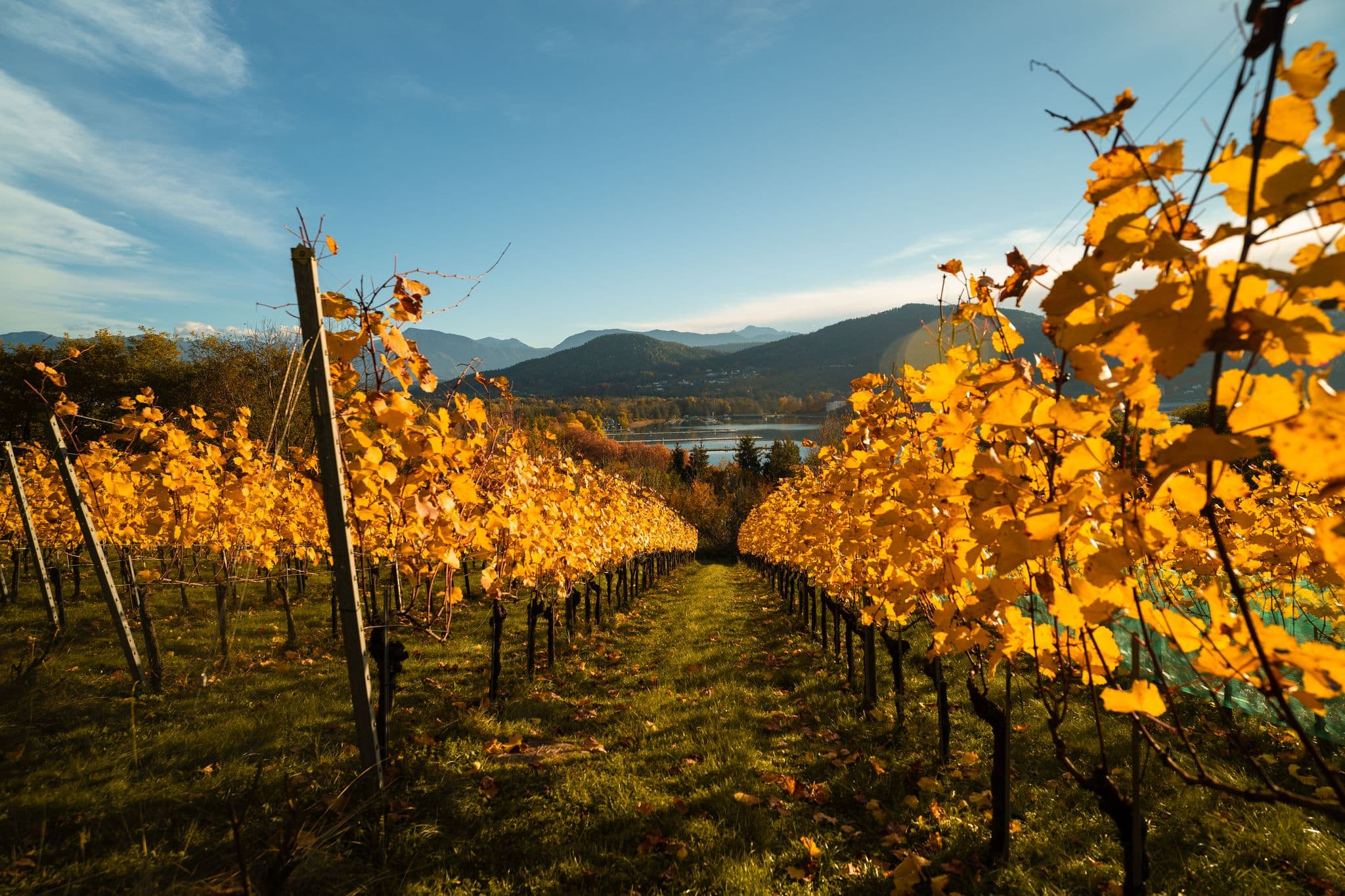 Herbst im Weingarten mit Blick auf Wörthersee