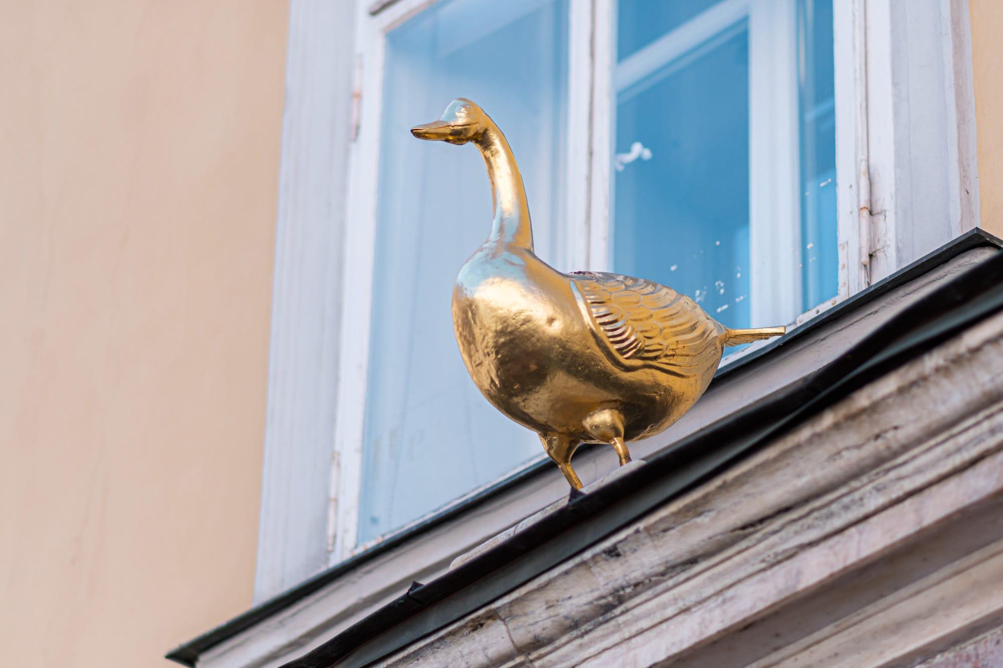 Goldene Gans, Alter Platz, Tiere in der Stadt, 9020 Klagenfurt am Wörthersee, Sehenswürdigkeiten