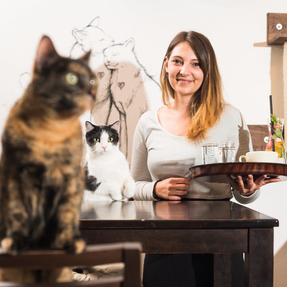 die Chefin des Katzencafés, Verena Kulterer mit einem Tablett in der Hand, auf diesem steht ein Cappuccino und zwei Wassergläser, neben ihr sitzt eine schwarz-weiße Katze, im Vordergrund des Bilder ist eine braun-schwarze Schilpattkatze zu sehen