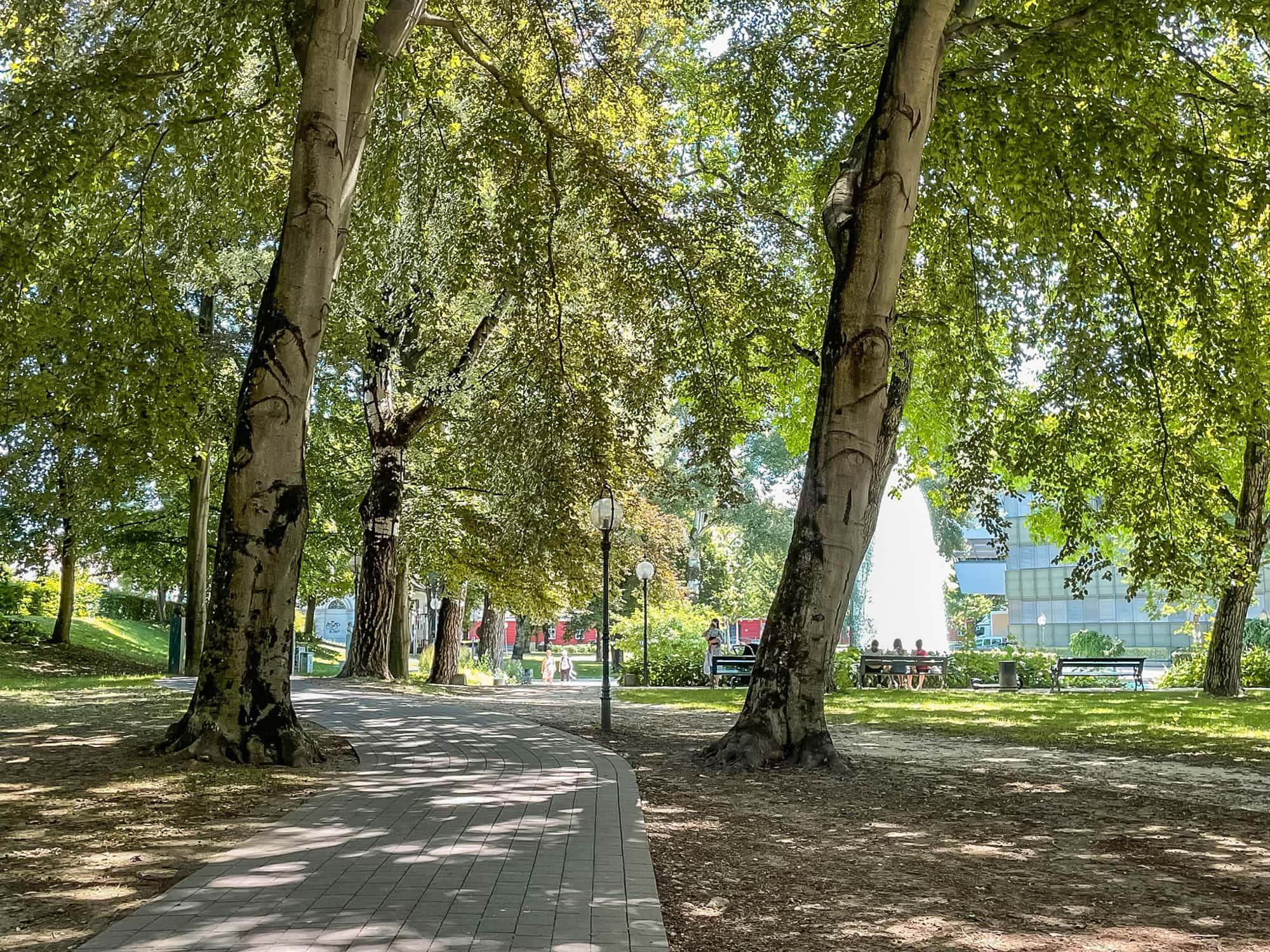Herrlicher Schatten unter den großen Bäumen im Göthepark