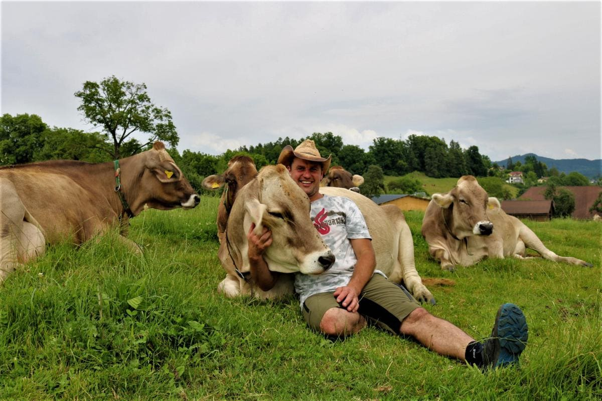 Robert Gössinger, Inahaber des Unternehmens Frischmilchautomat Hoislhof, liegt gemeinsam mit 5 Milchkühen auf der Wiese, eine kuschelt sich an ihn, er streichelt ihren Kopf